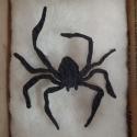 spider1web